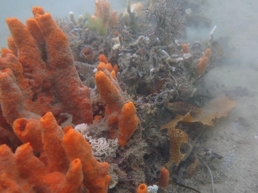 Octo among sponges_0216 - 4