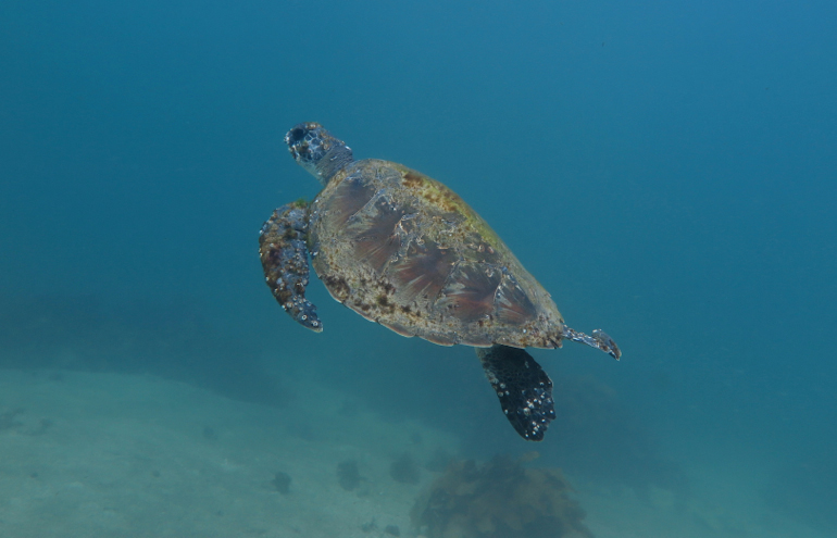 Turtle at Bower_1327-2