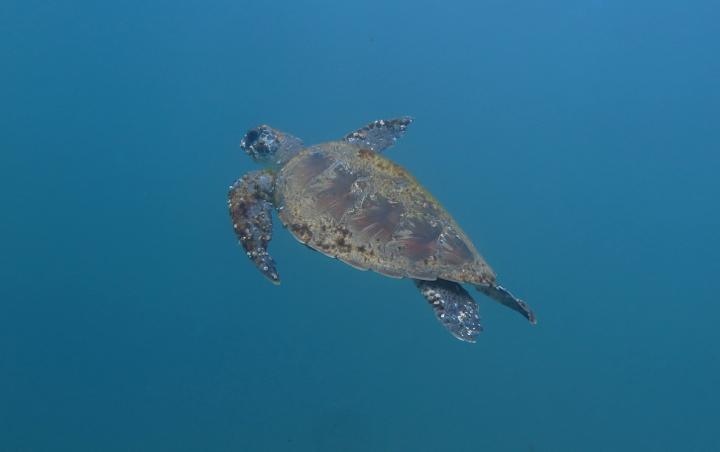 Turtle_1329