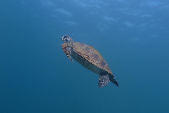 Turtle_1331