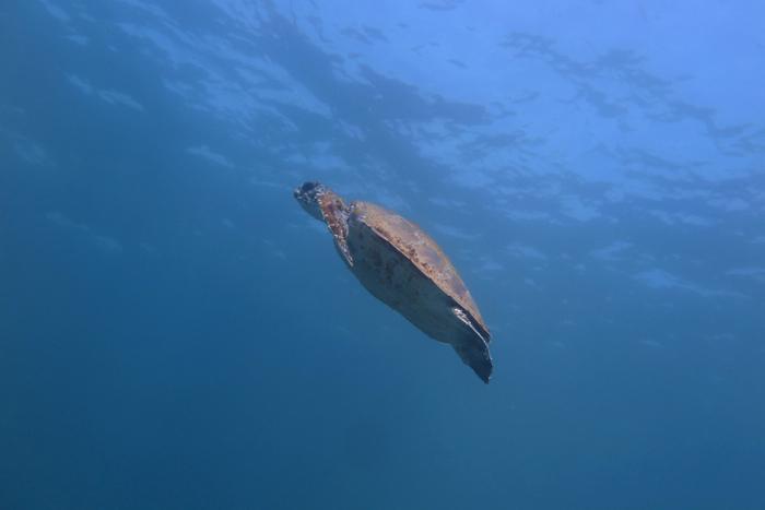 Turtle_1332
