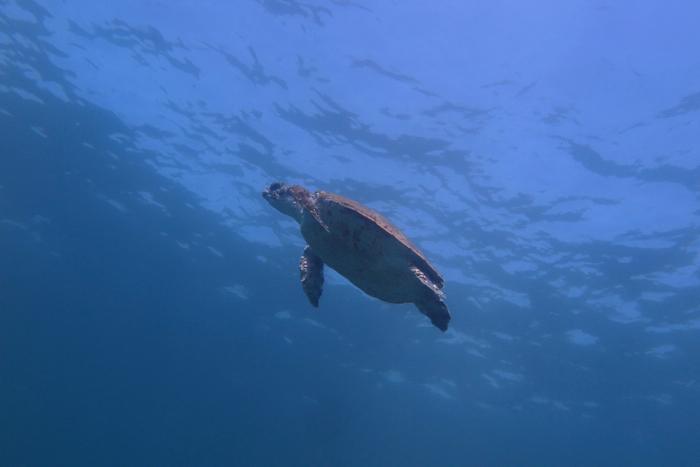 Turtle_1333