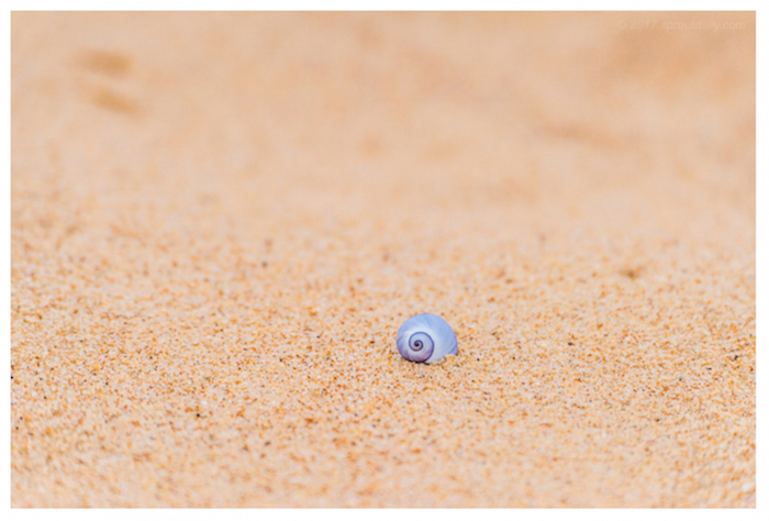 Violet snail by Sprout cmp
