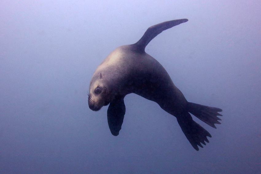 Seal_2555 - 4 cmp3