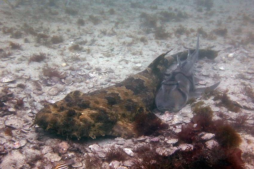 Sharks IMG_2715 cmp